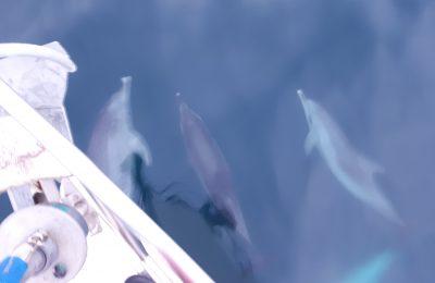 Golfinhos na proa